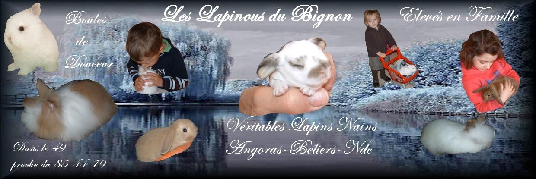 lapinousdubignon